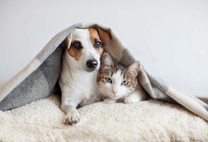Pet Insurance - Secure Your Little Family Member