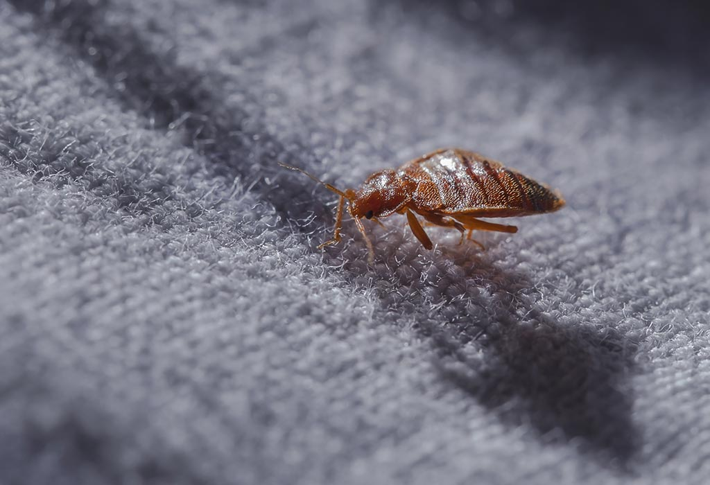 6 Home Remedies To Get Rid Of Bed Bugs