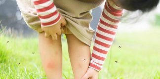 10 Effective Remedies to Get Rid of Mosquitoes at Home