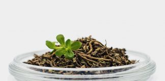 Amazing Benefits of Brahmi That You Should Know