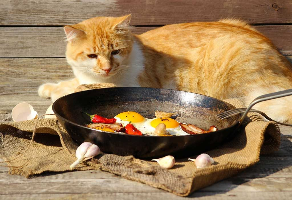 Homemade Cat Food - 8 Healthy and Tasty