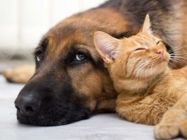 11 Ways Pets Try to Communicate With You