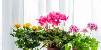 15 Best Indoor Plants for Apartment Living