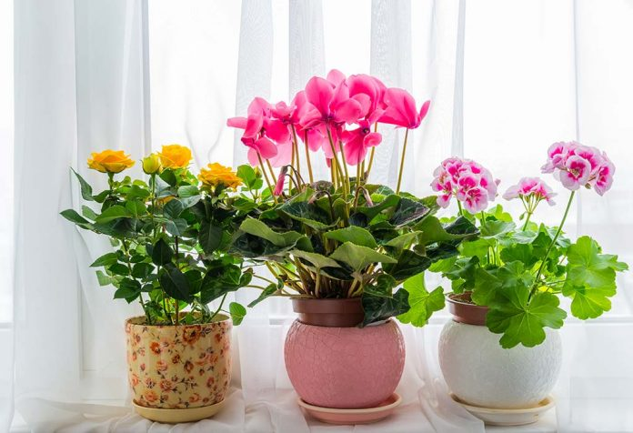 15 Best Indoor Plants for Apartment Living