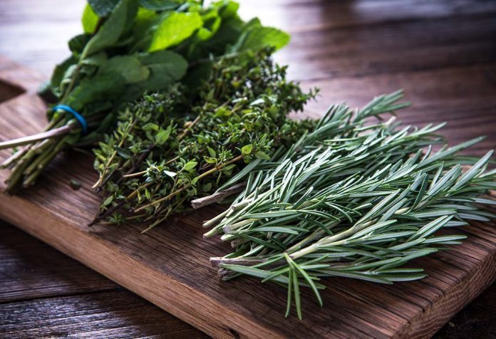 effective herbs for diabetes