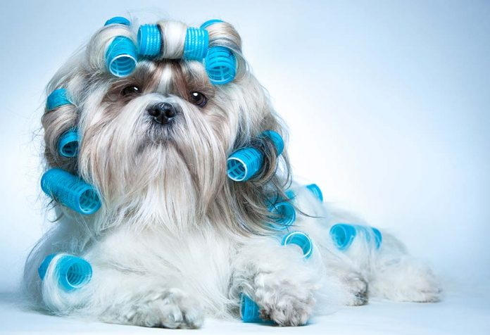 Groom Your Dog at Home with 10 Easy Steps