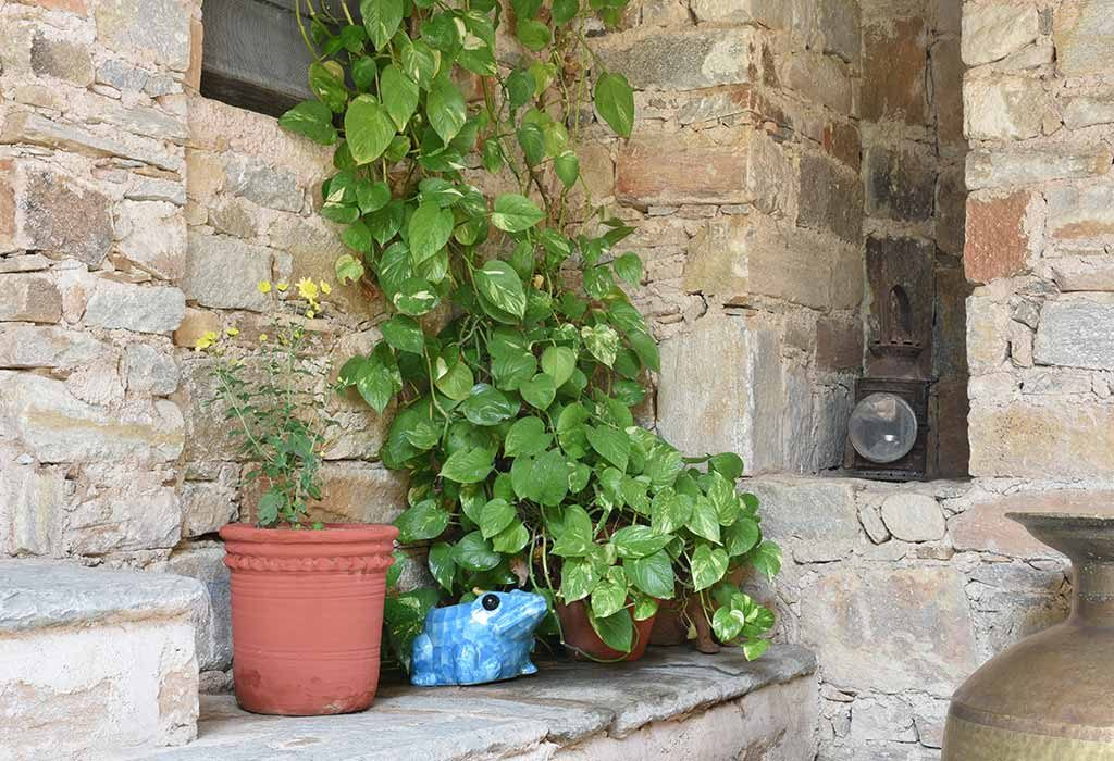 10 Lucky Plants That Will Bring Good Luck And Wealth To Your Home