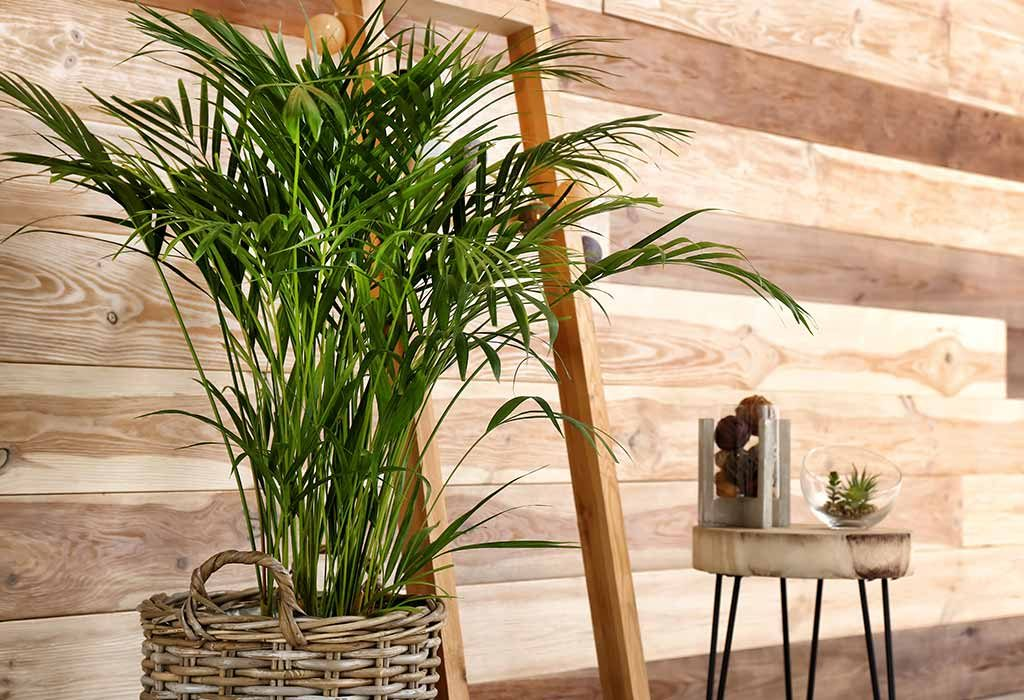 10 Lucky Plants That Bring Good Luck & Wealth for Your Home on order birds of paradise plant, zamiifolia house plant, spider house plant, fig house plant, houseplants plant, croton house plant, banana house plant, cast iron plant, rubber house plant, hydrangea house plant, peperomia house plant, fern house plant, zi zi plant, arrowhead house plant, umbrella house plant, avocado house plant, eternity plant, house plant identification succulent plant,