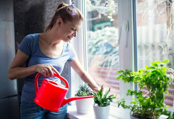 10 Lucky Plants that Bring Wealth, Health, and Love to Your Home