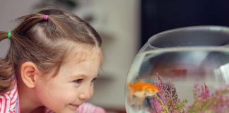 How to Clean a Fish Tank - Provide a Healthy Environment to Your Little Pets