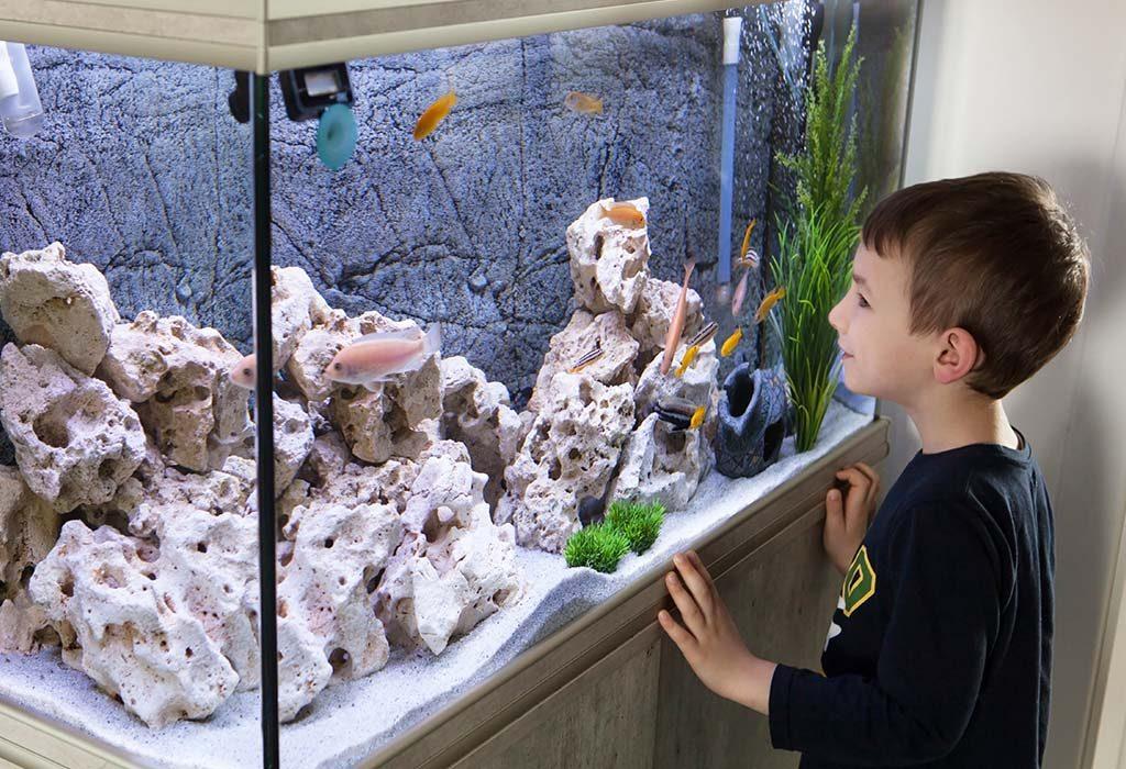How to Clean an Aquarium the Proper Way