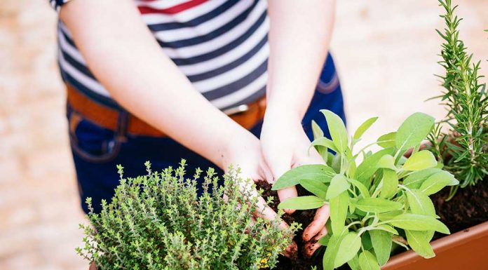 10 Must-Have Herbs to Grow at Home