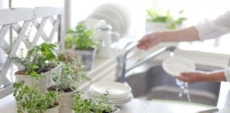 Indoor Plants for Beautiful and Sustainable Kitchen Decor