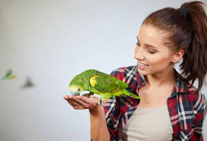 5 Best Bird Species that Make The Smartest Pets
