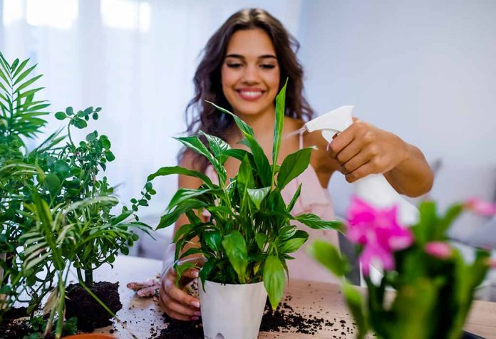 8 Things You Can Do to Stop Your Plants from Dying