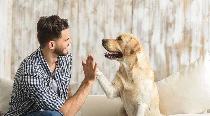 9 Ways Adopting a Dog Will Enrich Your Life