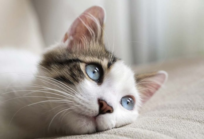100 Cutest Cat Names for Every Type of Kitten