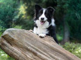 best longest living dog breeds