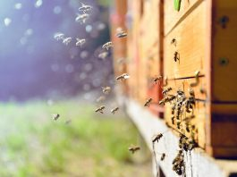 Practical Ways to Remove Honey Bees from Your Home