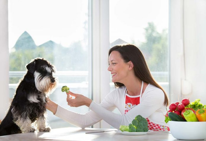 10 Healthy Vegetables and Fruits for Dogs