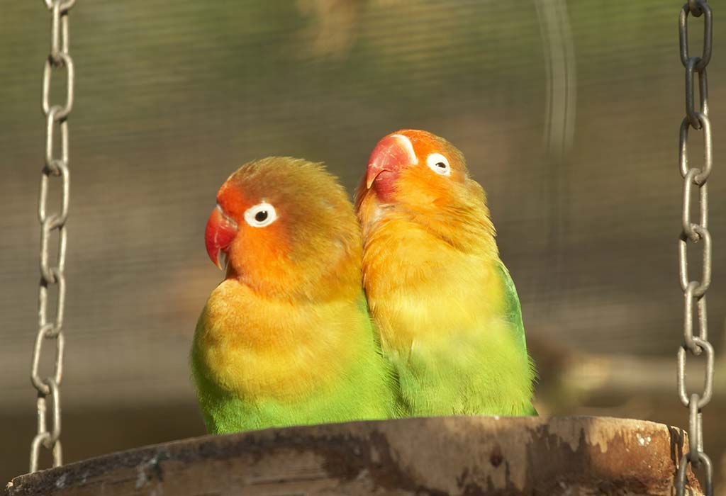 Best Foods For Love Birds Know What