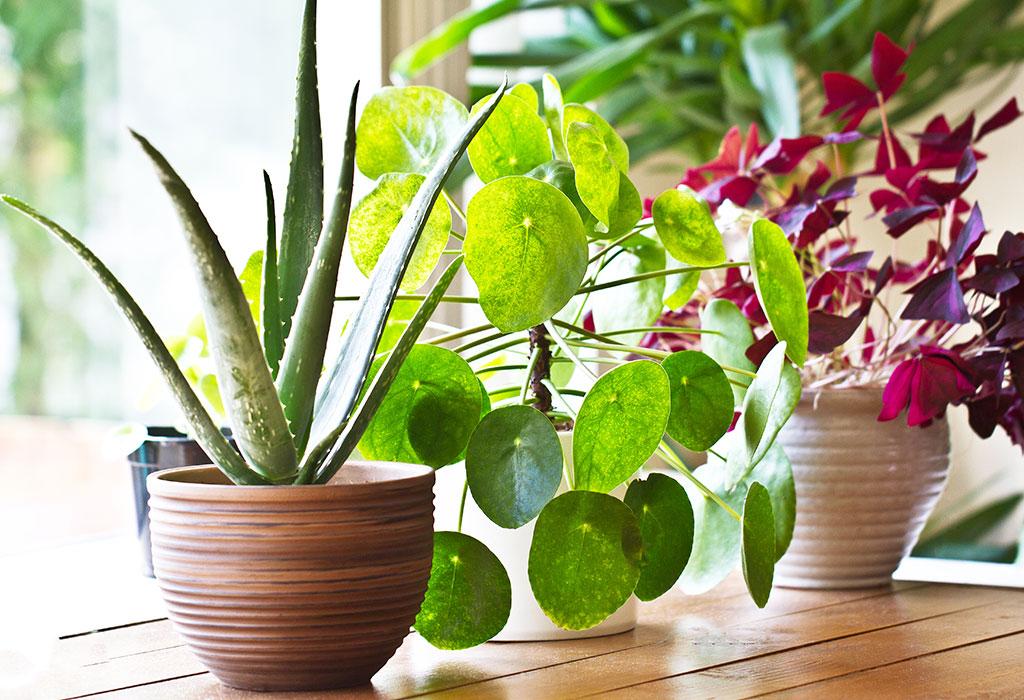 best indoor bedroom plants