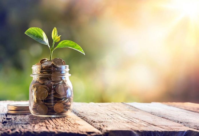 Vastu Tips to Ensure That Your Money Plant Attracts Wealth