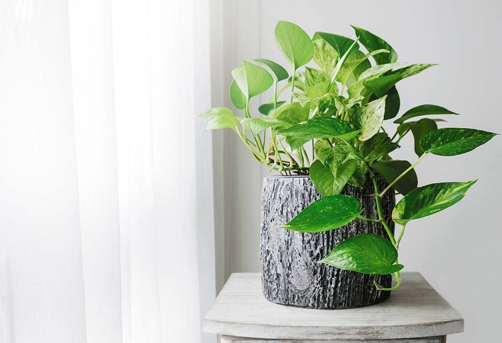 19 Vastu Tips For Keeping Money Plant At Home