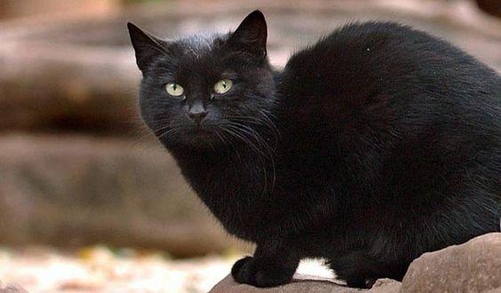 World's Wealthiest Cat