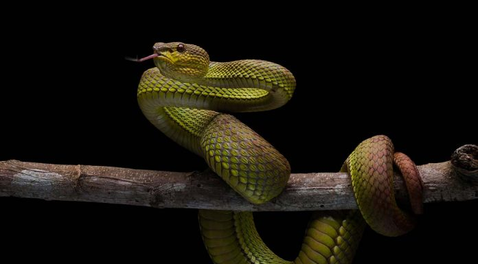 fascinating snake facts for kids