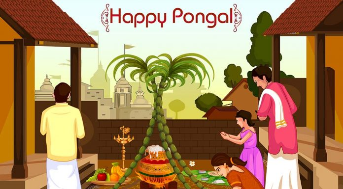 Pongal 2020 - Significance and Procedure to Celebrate the Tamil Festival