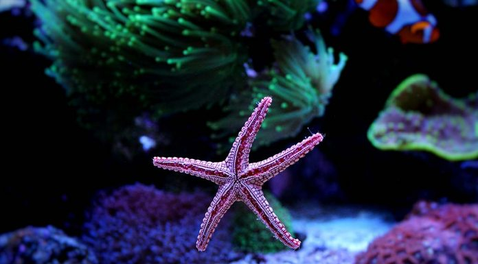 Facts and Information About Starfish for Kids
