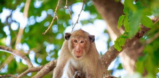 10 Facts About Monkeys for Kids