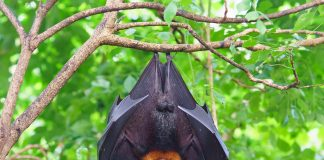 Facts and Information About Bats for Kids