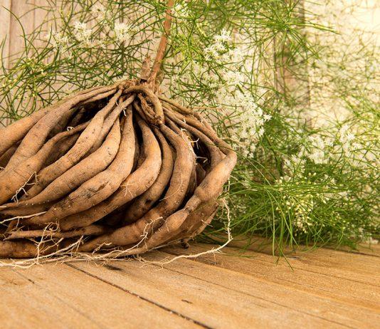 Incredible Benefits of Shatavari (Asparagus Racemosus)