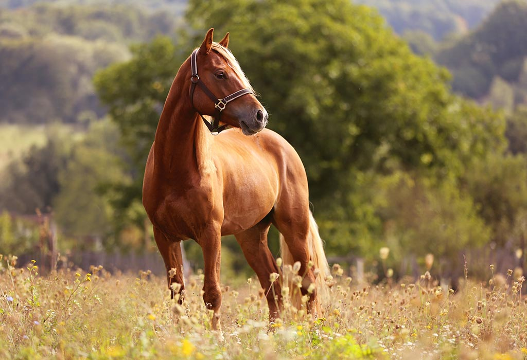 Interesting Horse Facts Information For Kids