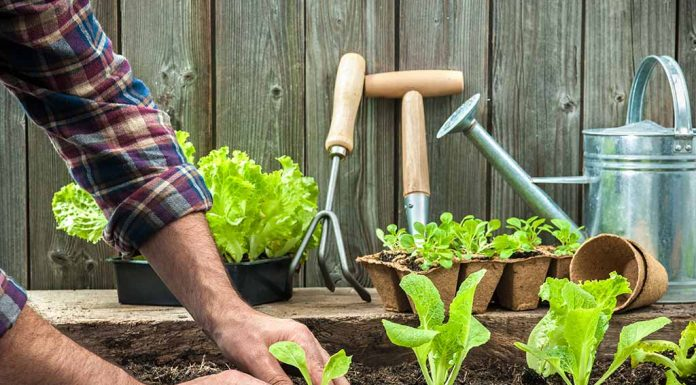 Best Soil for Plants for Your Home Garden