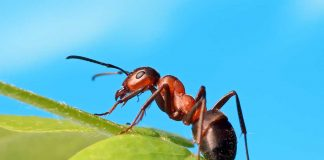 Fascinating Ant Facts and Information for Kids