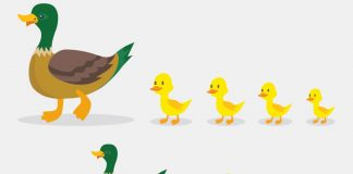 Amazing Duck Facts and Information for Kids