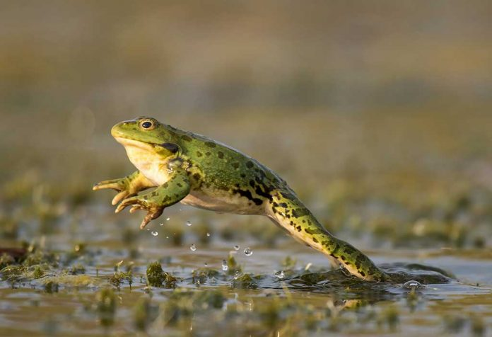 15 Fascinating Facts about Frogs for Kids