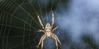 20 Fascinating Facts about Spiders for Kids