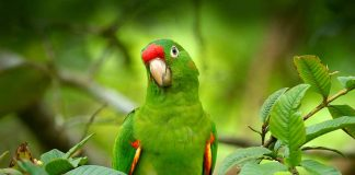Important Facts about Parrot for Kids
