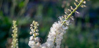 प्रजनन क्षमता वाढवण्यासाठी १२ उत्तम वनौषधी