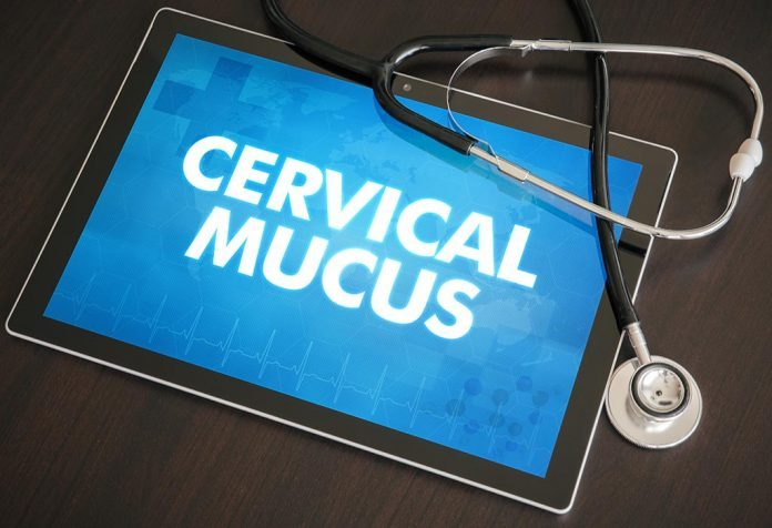Can You Detect Early Pregnancy by Checking Cervical Mucus?