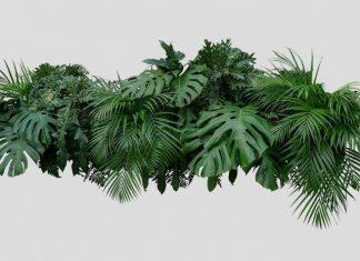 बच्चों के लिए पेड़-पौधों से संबंधित 50 इंट्रेस्टिंग फैक्ट्स