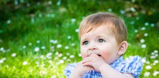 50 Tree Baby Names For Boys And Girls