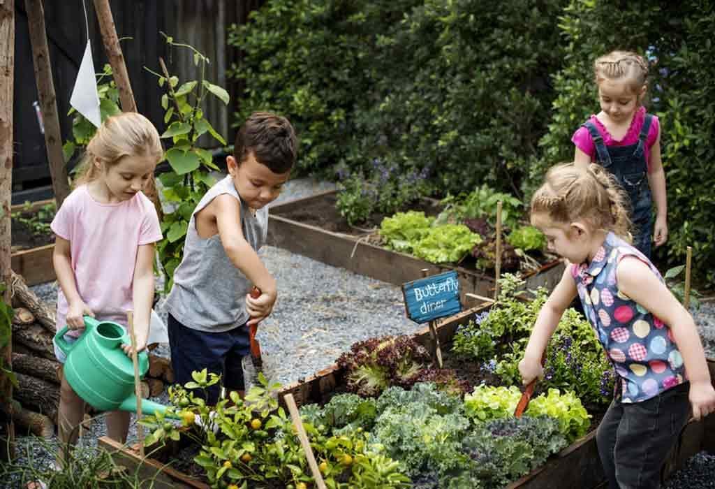 Growing a Mini-Garden