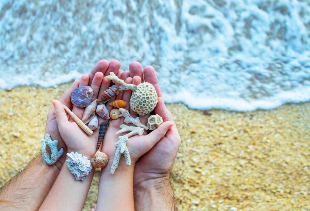 Collect the Seashells