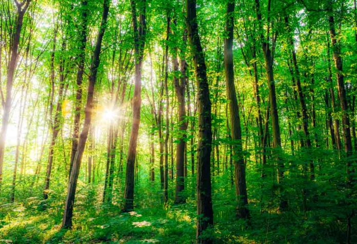 Interesting Facts About Forests for Kids