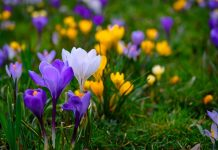Best Spring Blooming Flowers to Brighten Up Your Garden